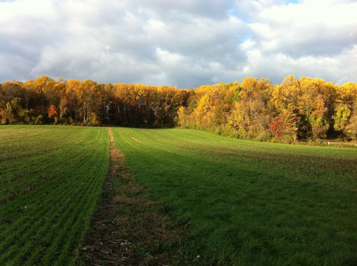 Autumn Gallop