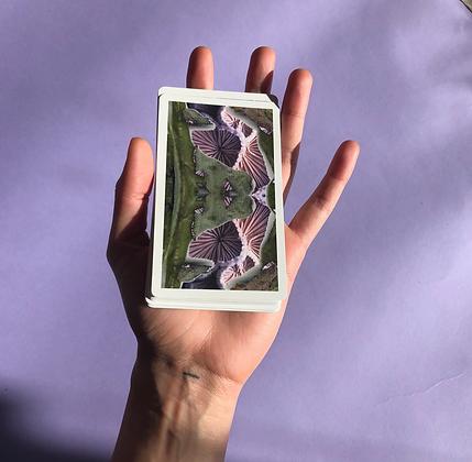 Weed-Kin: A Card Deck by Amanda Monti