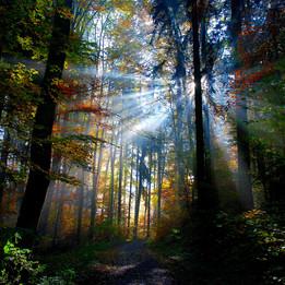 """Waldstimmung """"Licht für Dich"""""""