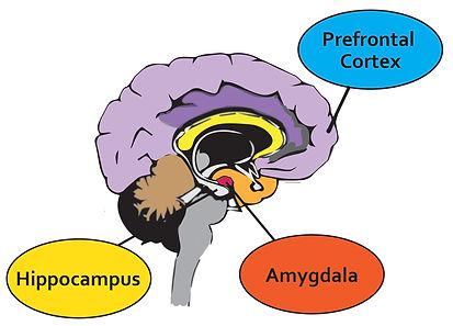 1 New Brain pic-01.jpg
