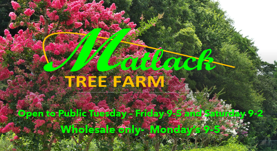cover photo for Matlack Tree Farm.PNG