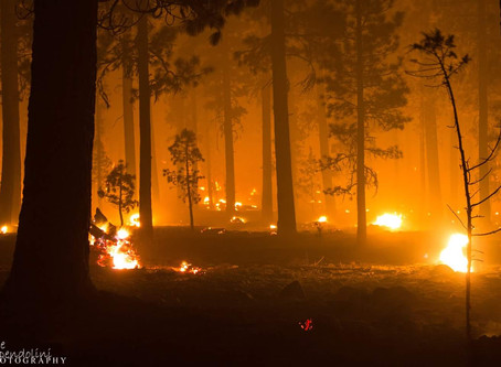 Addressing the real root of Western fires
