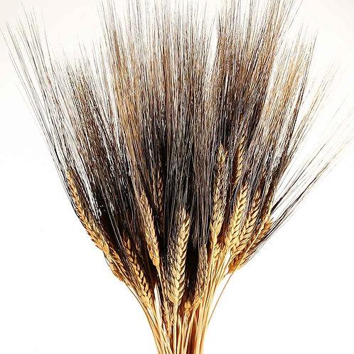 Dried Blackbeard Wheat