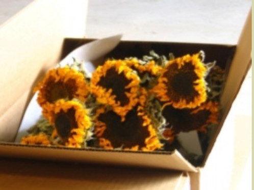 dried sunflower bundle