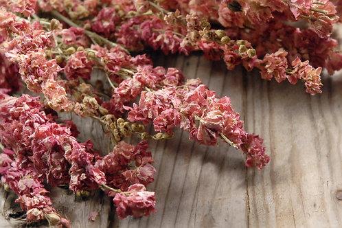 Pink Dried larkspur