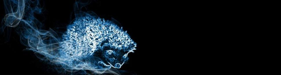 Hedgehog_Magic.jpg