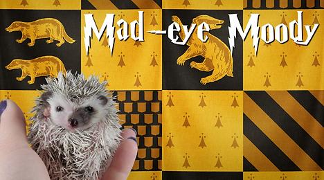 Mad-eye Moody_Hedgehog.png