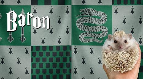 Baron_Hedgehog.png