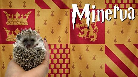 Minerva_Hedgehog.png