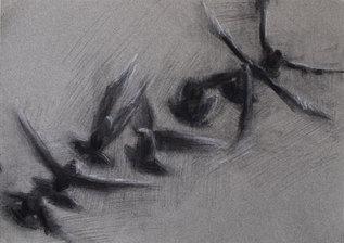 bird3hghres.jpg