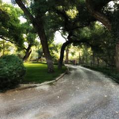 morningstarcorrales-driveway.jpeg