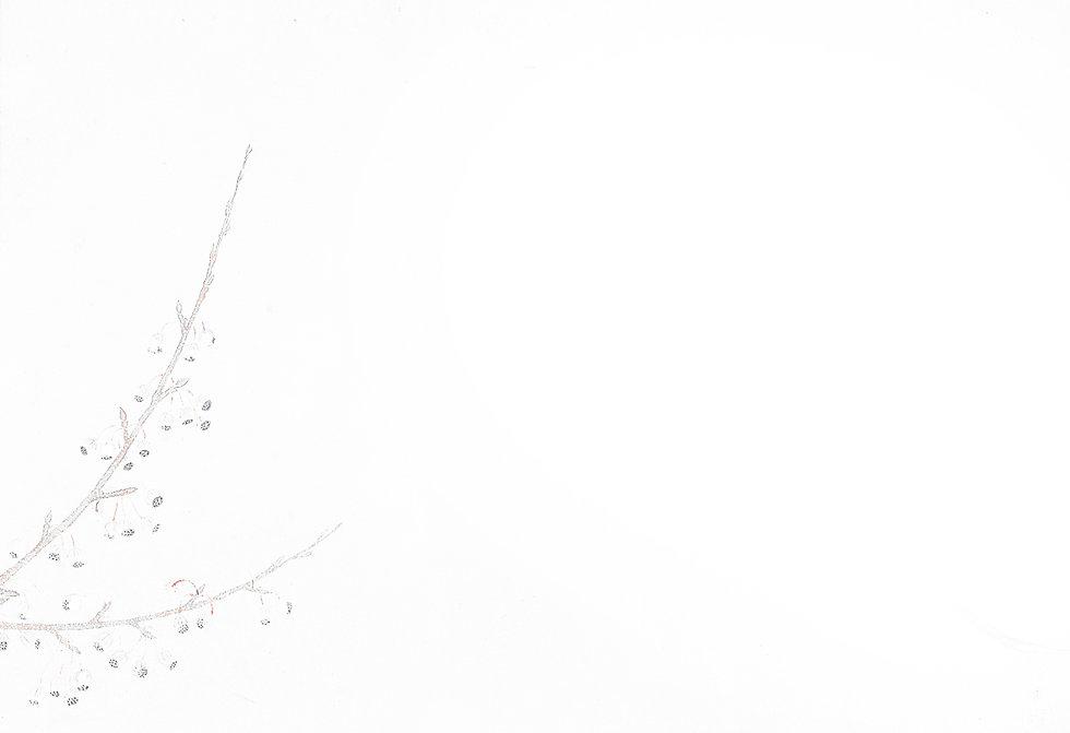 japanese-botanical-ink-and-brush-paintin