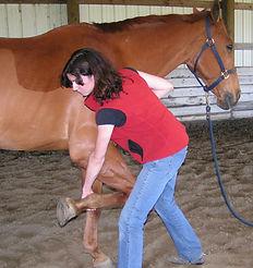 horse chiropractic