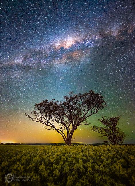 New Field of Stars TM.jpg