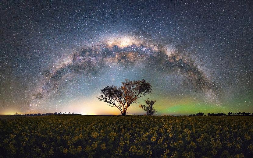 Field of Stars Website.jpg