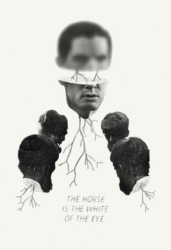 THE HORSE IS THE WHITE OF THE EYE