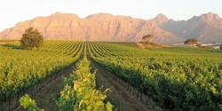 Panoramic vistas of Stellenbosch valley at Kleine Zalze vineyard in the Cape Winelands of South Afri