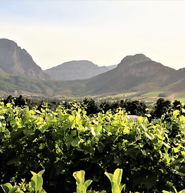 Valley Views from Le Lude Vineyard Franschhoek South Africa - Luxury Wine Trails Exclusive Cape Town wine & food tours