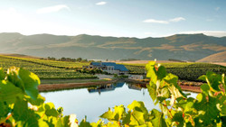 Views of Creation Vineyards in South Africa's Cape Winelands of Hermanus - on tour with Luxury Wine