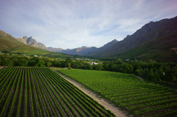 Afternoon views of Stellenbosch valley from Lanzerac Vineyard - exclusive tours by Luxury Wine Trail