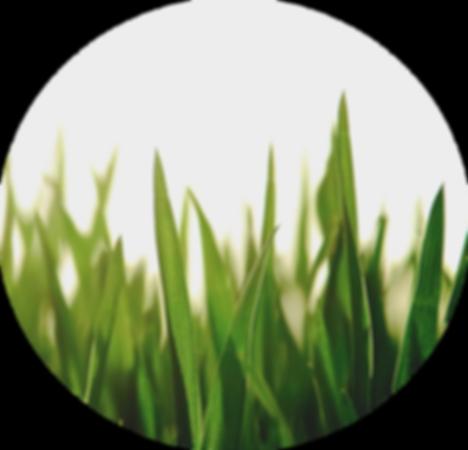 grönt 2 (rund).png