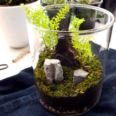 Great House Decoration Item... Terrarium