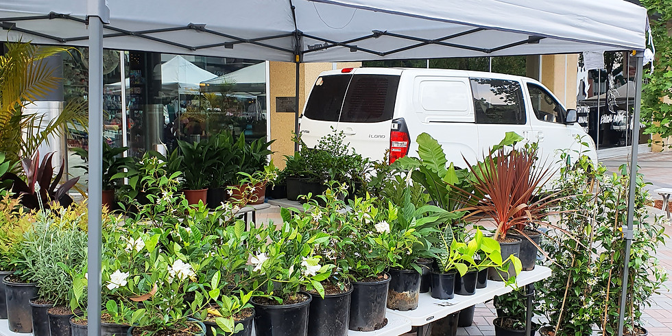 Huge Plant Sale at Hornsby