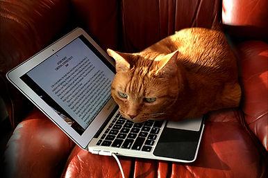 Harry on Mac.001.jpeg
