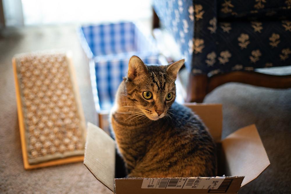 Cat in a box - TassieCat