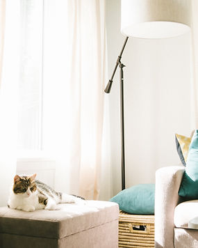 Keeping your cat happy at home - TassieCat