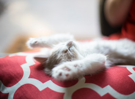How to Love Your Cat Even More - It's Possible!!