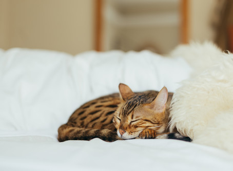 Are You No Longer Able To Care For Your Cat?