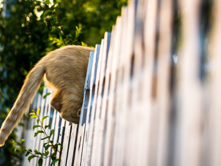 Dealing with Nuisance Cats in your Neighbourhood