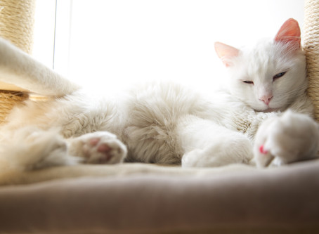 Microchipping Your Cat - What You Need to Know