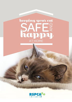RSPCA Keeping your cat safe and happy at home - TassieCat