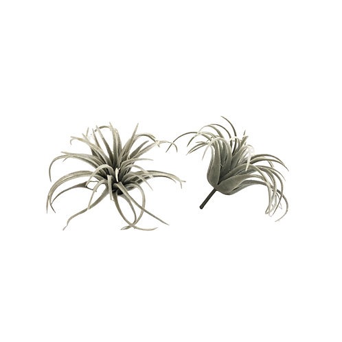 Faux Airplants #1 - Set of 2