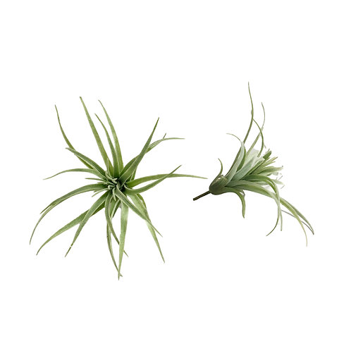 Faux Airplants #3 - Set of 2