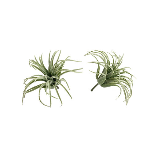 Faux Airplants #2 - Set of 2