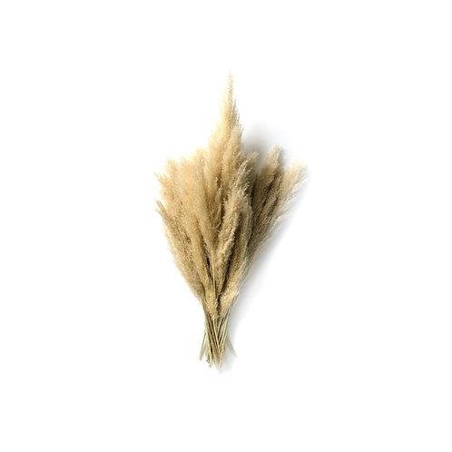 35 Pieces of Pampas Grass
