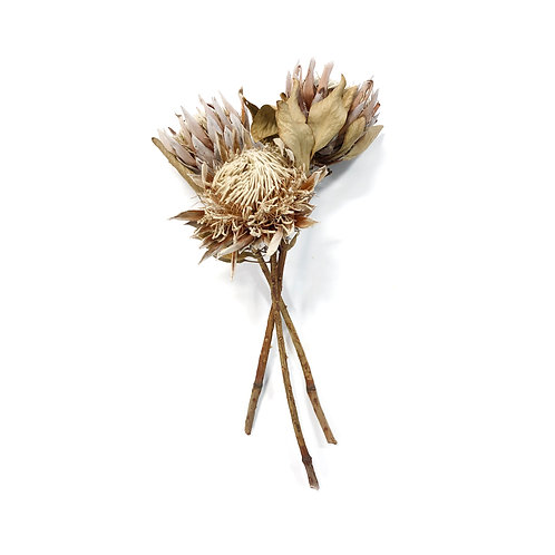 Dried Protea Flowers - Set of 3