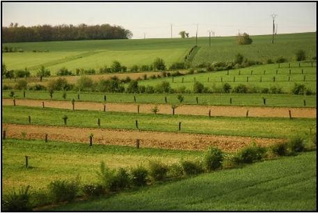 Photo de champs agro-forestiers de la ferme en coton de Nicolas Petit à Auch dans le Gers faisant le lien avec le site internet de la ferme