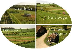Image représentant une ferme, des champs agro-forestiers, un poulailler répartis dans une image coupé en quatre photos et faisant le lien avec le site internet de la Ferme en Coton à Auch dans le Gers de Nicolas et Anne-Catherine Petit