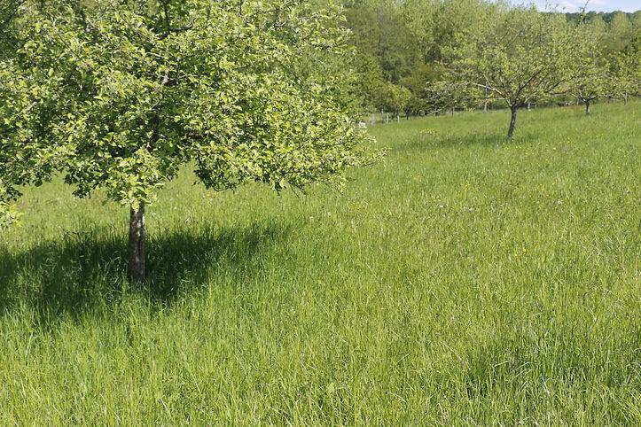 photo d'un verger et d'un champ avec au premier plan un pommier