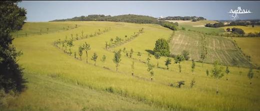image montrant une photo des champ agroforestiers de Pierre Pujos dans le gers