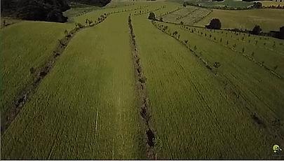 photo aérienne de la ferme Pujos dans le Gers montrant des lignes d'arbres en agro-foresterie au sein du champ de céréales