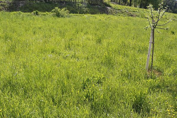 photo d'un jardin avec de l'herbe haute et d'un jeune pommier