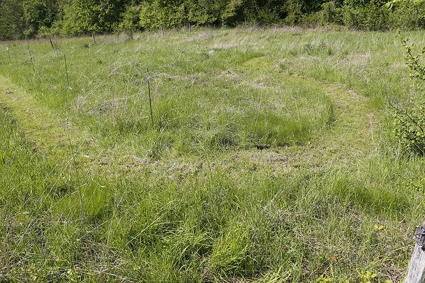 photo d'un champ en pature laissé à la repousse