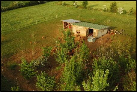 photo aérienne d'un poulailler mobile à la ferme en Coton de Nicolas et Anne-Catherine Petit dans le Gers ainsi que des nombreux arbres plantés sur les parcours des volailles. Image faisant le lien avec le site internet de la ferme