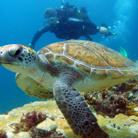 """Diving with our partners       """"Cabo Verde Diving"""""""