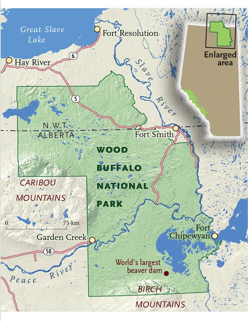 Wood Buffalo National Parks Alberta Bad Credit New Or Used Car - Where is buffalo